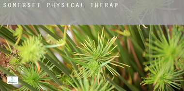 Somerset  physical therapy